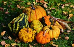 Pumpkins, Decorative Squashes Royalty Free Stock Photos