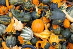 Pumpkins, Decorative Squashes Royalty Free Stock Images