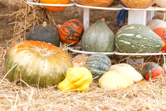 Pumpkins with different Stock Photography