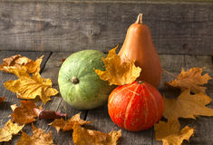 pumpkins of different colors Stock Photography