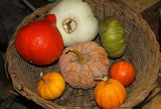 Pumpkins of different colours in a basket Royalty Free Stock Images