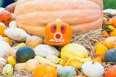 Pumpkins with different colours in the field Stock Photography
