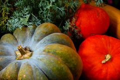 Pumpkins of different colours in the garden Stock Photography