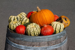 Pumpkins. Different pumpkins on an old barrel Stock Image