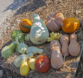 Pumpkins of different shapes and colors Royalty Free Stock Photography