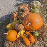 Pumpkins of different shapes and colors Stock Image