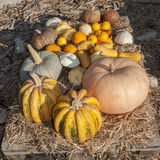 Pumpkins of different shapes and colors Royalty Free Stock Images