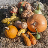 Pumpkins of different shapes and colors Stock Photo