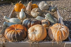 Pumpkins of different shapes and colors Royalty Free Stock Photo