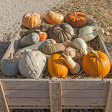 Pumpkins of different shapes and colors Royalty Free Stock Photos