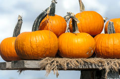 Pumpkins of different sizes Stock Images