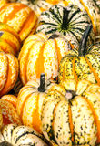 Pumpkins of different sizes Royalty Free Stock Photos