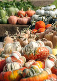 Pumpkins of different sizes Royalty Free Stock Image