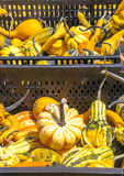 Pumpkins of different sizes Stock Photo