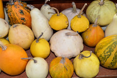 Pumpkins of different varieties are on the market shelf. Stock Photos