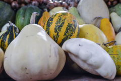 Pumpkins of different varieties are on the market. Royalty Free Stock Photos