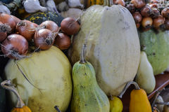 Pumpkins of different varieties of onions in the market. Royalty Free Stock Photo