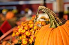 Pumpkins dispatch. Before Halloween near Richmond VA Royalty Free Stock Image