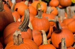 Pumpkins dispatch. Before Halloween near Richmond VA Royalty Free Stock Photos