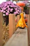 Pumpkins dispatch. Before Halloween near Richmond VA Stock Images