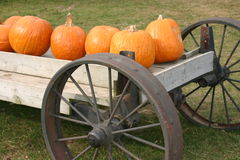 Pumpkins on  display. These are Pumpkins on a cart Royalty Free Stock Photography