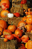 Pumpkins display Royalty Free Stock Images