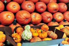 Pumpkins on display at the Amish Market in NYC Stock Images