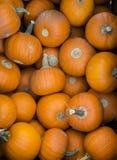 Pumpkins on Display Stock Photos