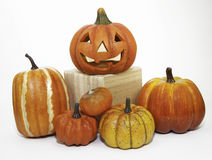 Pumpkins on Display Royalty Free Stock Images