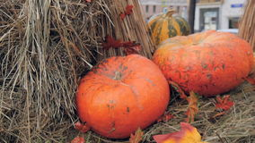 The pumpkins are on display for a Halloween celebration. The trolley stands at the exhibition, with pumpkins and other vegetables. Beautiful window dressing stock footage