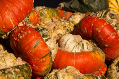 Pumpkins on display for Halloween, food or decorations Royalty Free Stock Photography