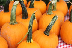 Pumpkins on display Royalty Free Stock Photos