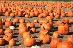 Pumpkins on Display Stock Images