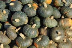 Pumpkins on Display Stock Image