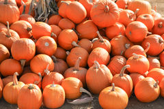 Pumpkins on Display royalty free stock photo