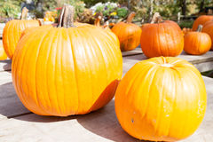Pumpkins on display. Stock Image