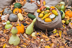 Pumpkins diversity on the ground Stock Images