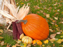 Pumpkins and Dried Corn Outdoor Still Life Stock Images