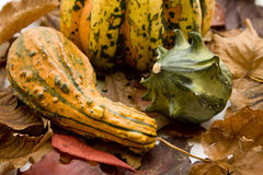 Pumpkins on dry leaves Stock Photos