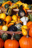 Pumpkins, edible and decorative Stock Photography