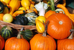 Pumpkins, edible and decorative Royalty Free Stock Images