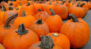 Pumpkins. Fair pumpkins for halloween fest Royalty Free Stock Photos