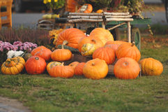 Pumpkins in fall Royalty Free Stock Photo