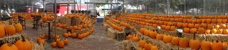 Pumpkins in the Fall. Pumpkins for sale at Richmond Country Farms Market in Richmond, British Columbia Stock Images