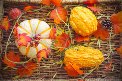 Pumpkins. Fall background. Stock Photography