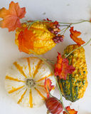 Pumpkins. Fall background. Royalty Free Stock Images