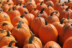 Pumpkins for fall Stock Photography