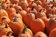 Pumpkins for fall. Bright orange pumpkins in brilliant sunlight Stock Photography