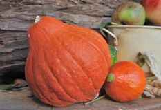 Pumpkins and fall fruits Stock Image