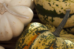 Pumpkins. Fall Harvest Pumpkins closeup macro Stock Photo